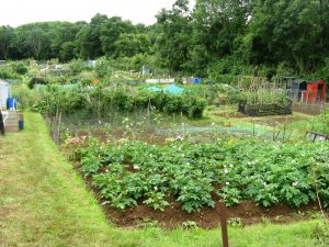 allotment-view-july2012[1]